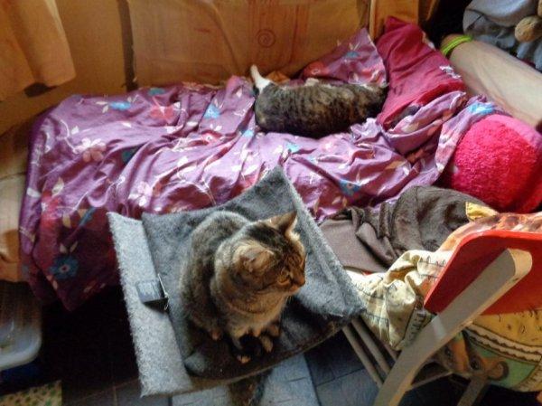Salut hommage-as-memere-ma-cha Fermeture de compte je comprend en quoi sa choque de rendre hommage as son chat