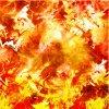 wallpaper phoenix :p