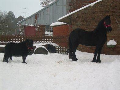 a gauche le petit kiwi et droite polka tout 2 les chevaux de donna
