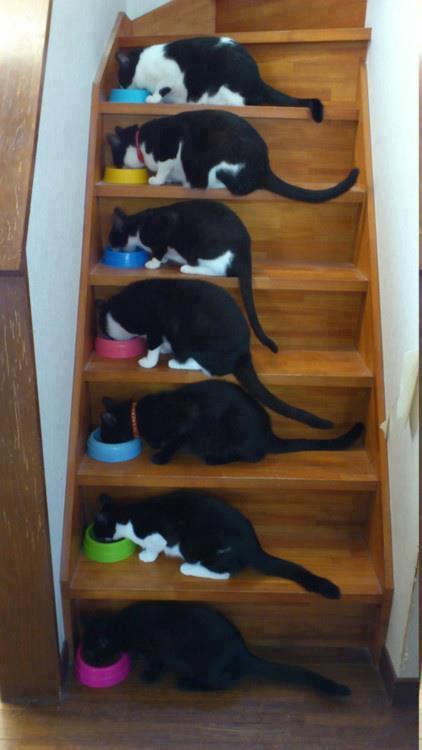 A qui le tour il y a encore de la placez dans l' escalier