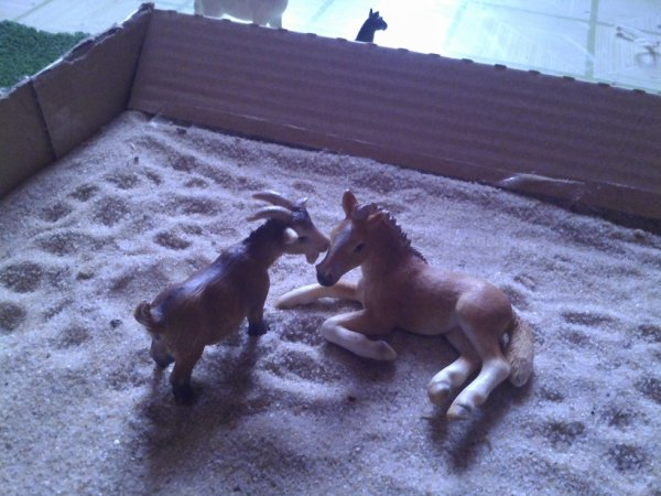 pour le photo show de love-schleich2000
