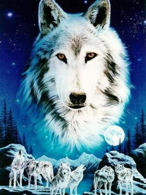 .loup