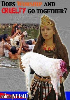 la fête rituelle de GADHIMAI