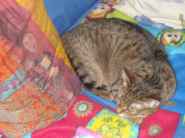 Mon chat Liloo