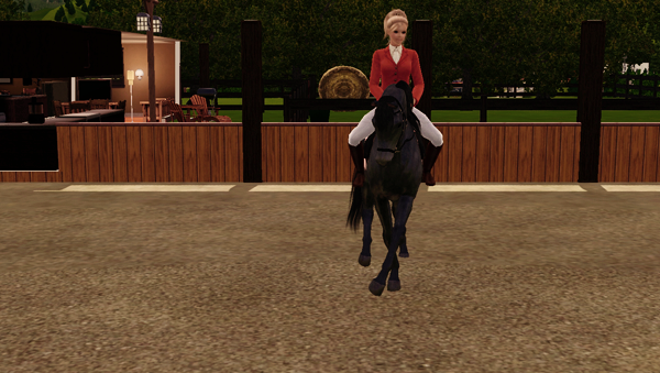 Photo : Concour Dressage n°1