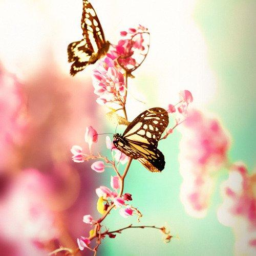 Nos papillons en herbe