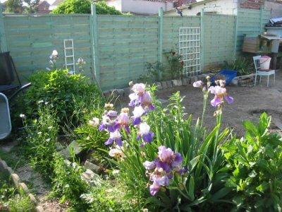 mes fleurs  notre jardin
