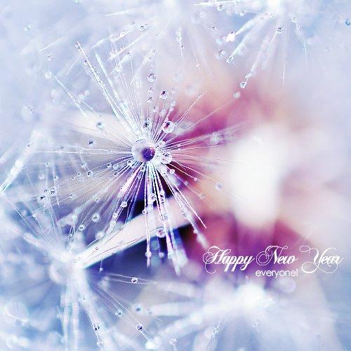 Bonne année 2011!!!!