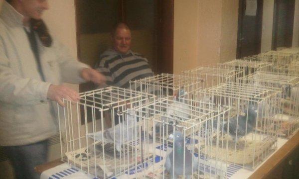 esposition des pigeons de notre amis gerard est pascal