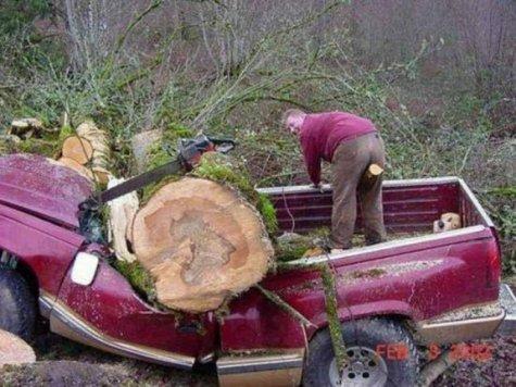 aller au bois