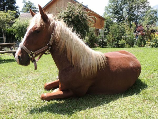 Pony Land