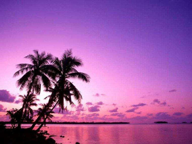 Chapitre 8 : Direction l'île déserte