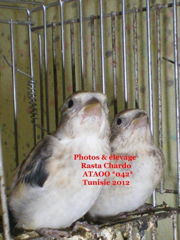Propre élevage 2012