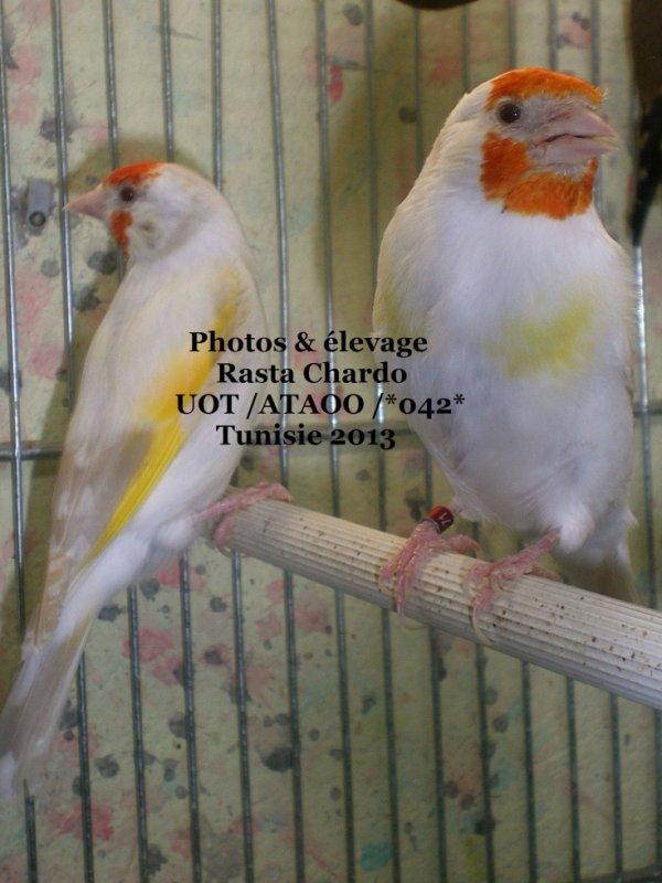 deux femelles lutino (Maman et fille lol )