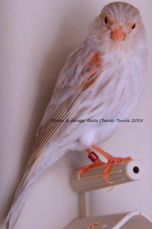 Isabelle rouge mosaique