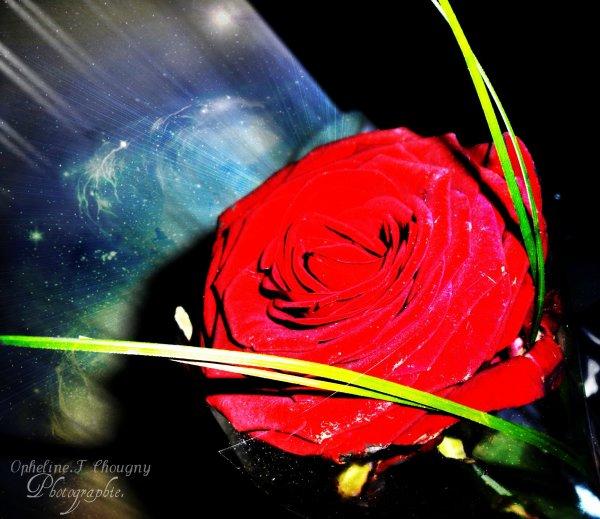 Une rosé du matin , qui ce pose sur une pétales de rose de couleur rouge vif .