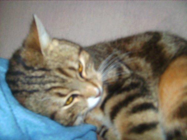 Mon chaton d'amour ♥♥