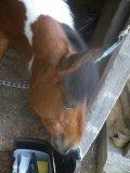 Photo de x3-chevaux-x63