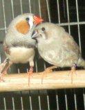 Photo de Passion-Des-Oiseaux