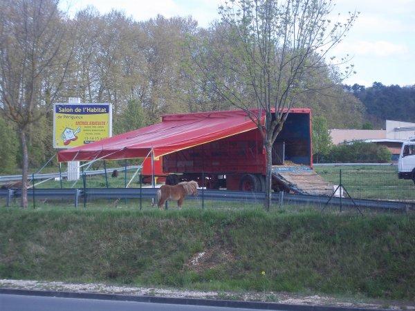 cirque roger lanzac à perigueux(24)