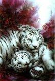 Photo de passion-tigres72