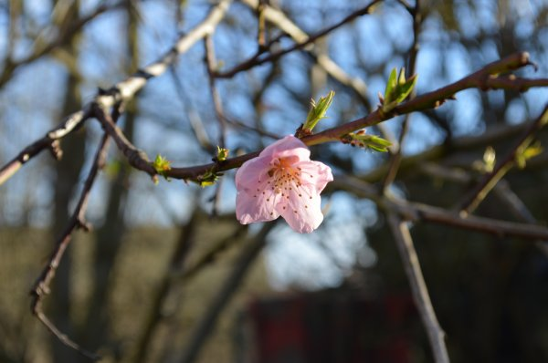 Vive le printemps!!!