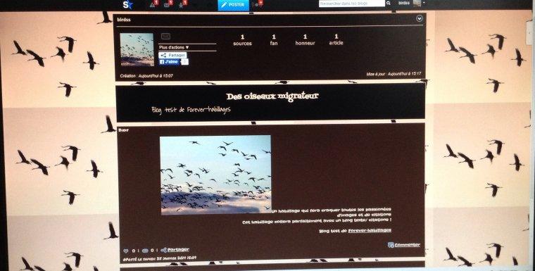 Habillage oiseaux
