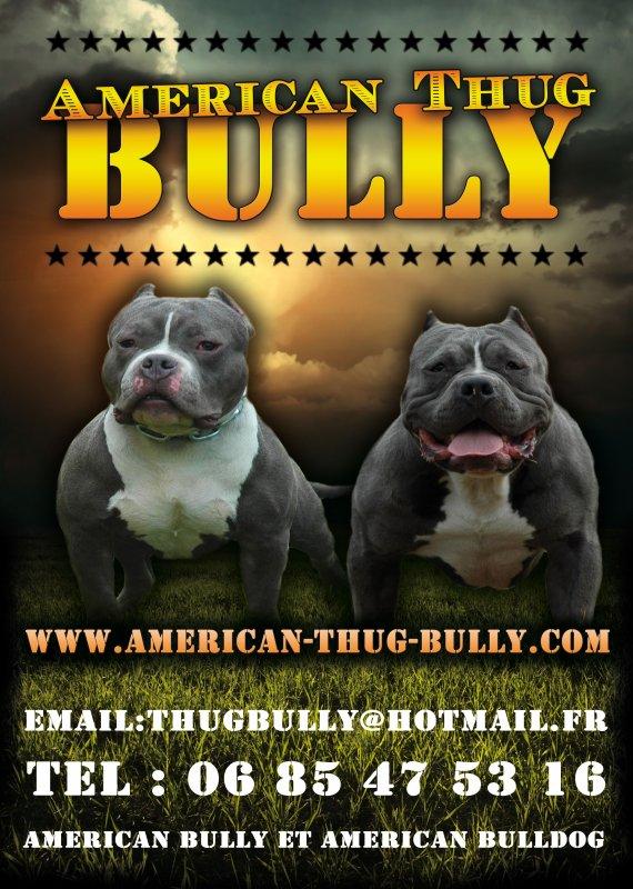 AMERICAN THUG BULLY