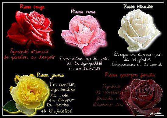 la signification des couleurs des roses pour le