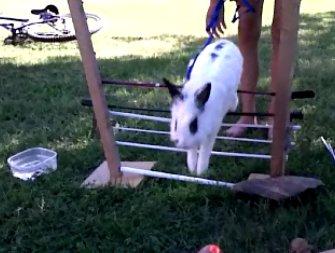 Comment apprendre le kaninhop