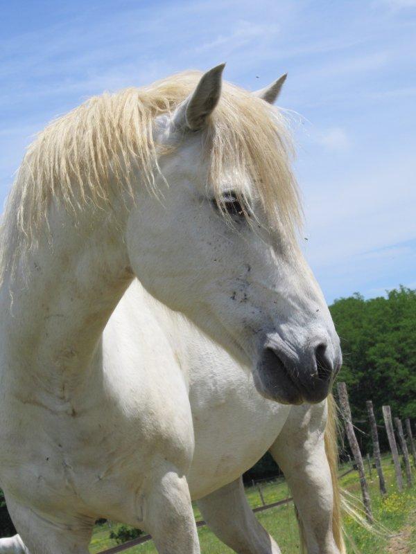 Mon poney Ottis