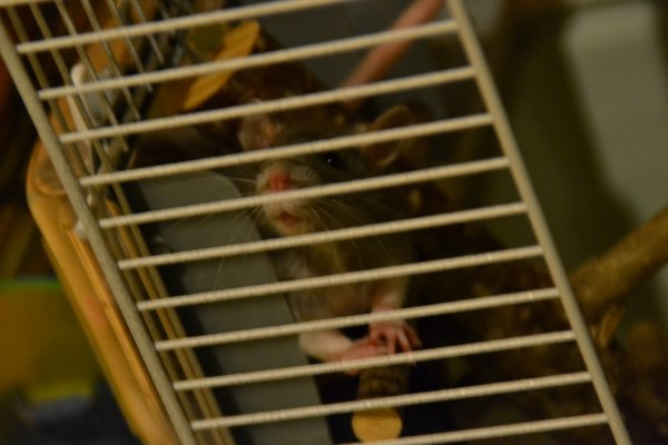 Les ratoooons ♥
