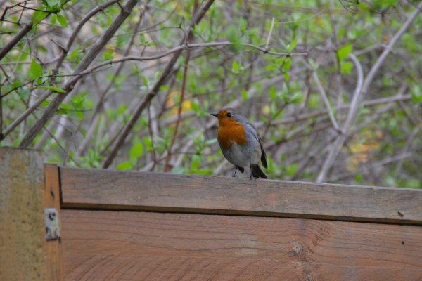 Petits oiseaux du jardin ~