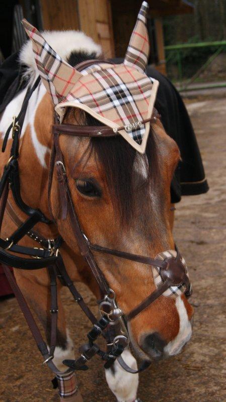 L'équitation est le seul sport individuel qui ce pratique a deux ! L'un sans l'autre on est rien <3