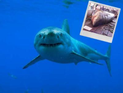 La disparition des requins : Conséquences sur l'écologie