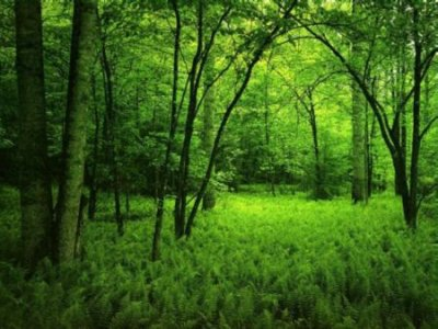 La disparition des forêts