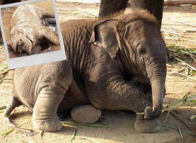 Commerce de l'ivoire
