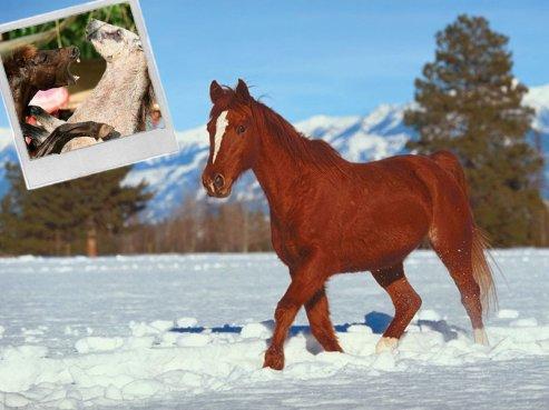 Les combats de chevaux