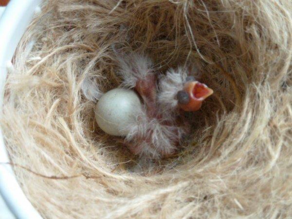 Red Black Greywing Pastel Mosaic Nest 2