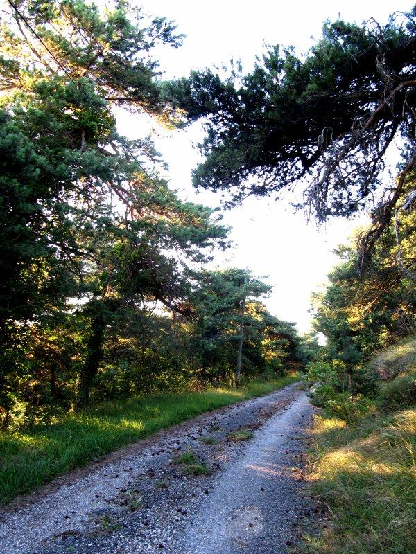 Petits paysages de la Drôme et d'ailleurs