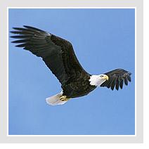 Sur les ailes d'un aigle
