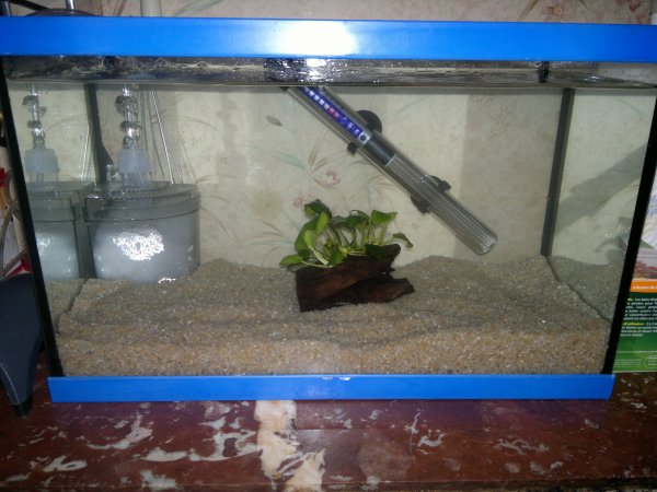 aquarium alevins