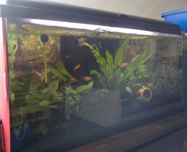 Mon aquarium de 96 litres Maintenant !!
