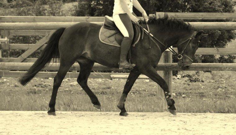 """""""C'est en travaillant son cheval avec l'idée qu'il soit heureux, qu'on devient moins égoïste et plus généreux"""""""