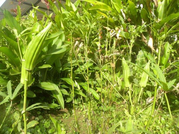 des belle fleur des mon jardin