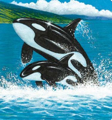 Un joli dessin d 39 orque bienvenue dans le monde des orques mes animaux - Dessin d orque ...