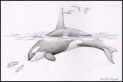 Trop beau dessin bienvenue dans le monde des orques - Trop beau dessin ...