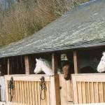 la passion pour les chevaux !!