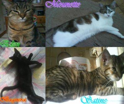 ❤  mai 4 chats que j'aime  ❤