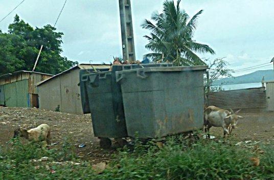 COMORES : Halte à la répression coloniale de l'Etat français à Mayotte